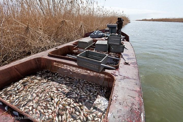Как ловят рыбу в Астрахани (24)