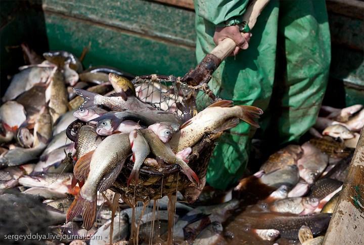 Как ловят рыбу в Астрахани (28)