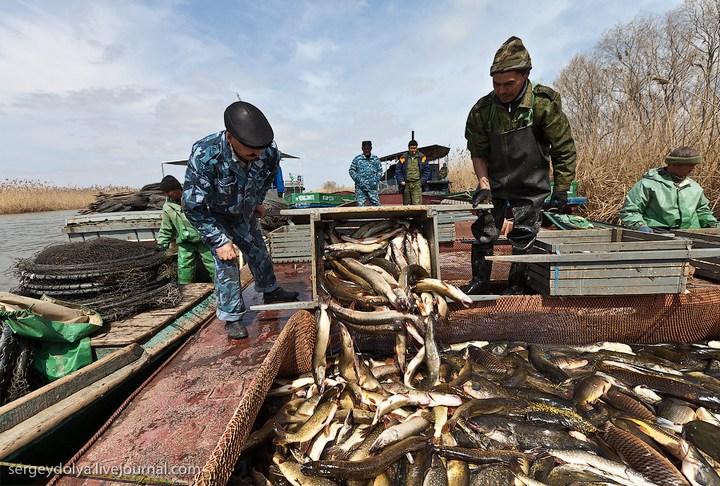 Как ловят рыбу в Астрахани (29)