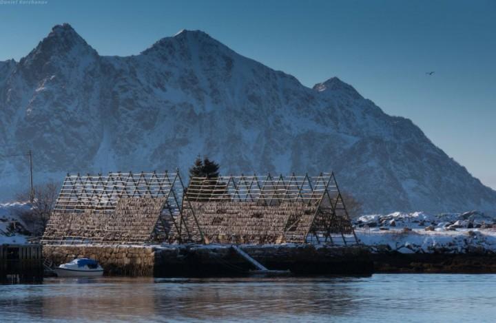 Как ловят треску в Норвегии (32)