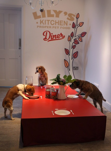 Необычный ресторан для собак (5)