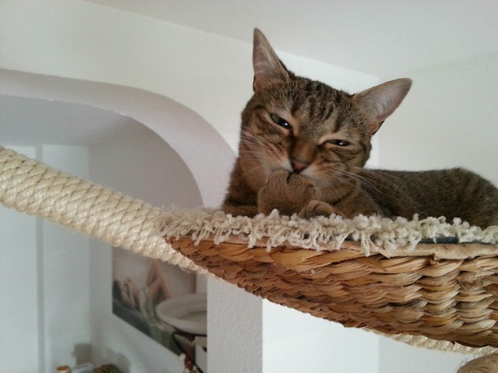 Игровая мебель для кошек (10)