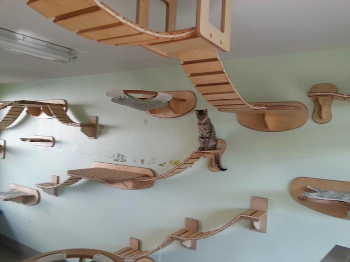 Игровая мебель для кошек (1)