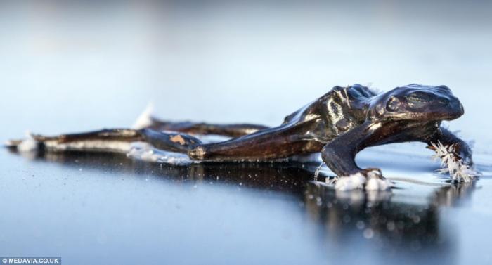 Остаться в живых или история о замерзшей лягушке (1)