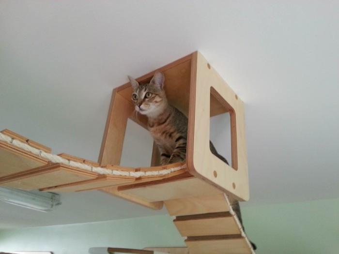 Игровая мебель для кошек (8)