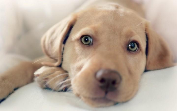 10 заблуждений о жизни собак