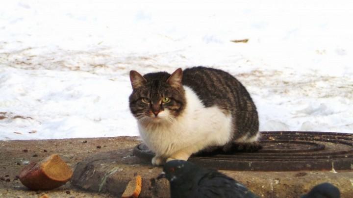 Наглый кот (3)