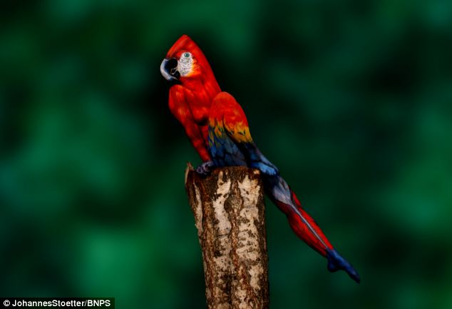 Тело женщины раскрашено в виде попугая, красивая иллюзия (1)