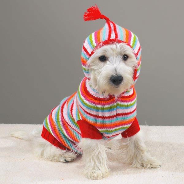 Зачем нужна одежда для собак? (3)