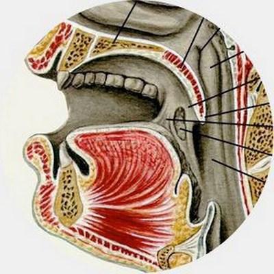 Ошибки эволюции в строении человеческого тела (1)