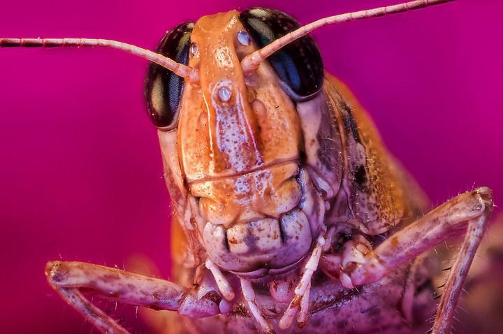 Макро фотографии насекомых (1)