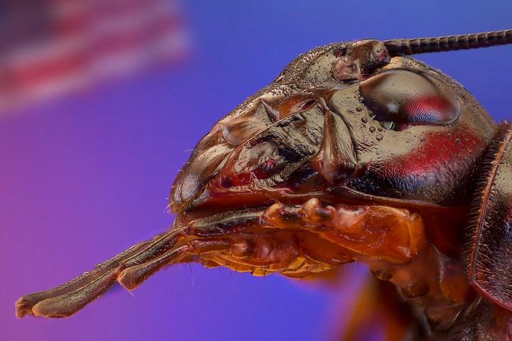 Макро фотографии насекомых (2)