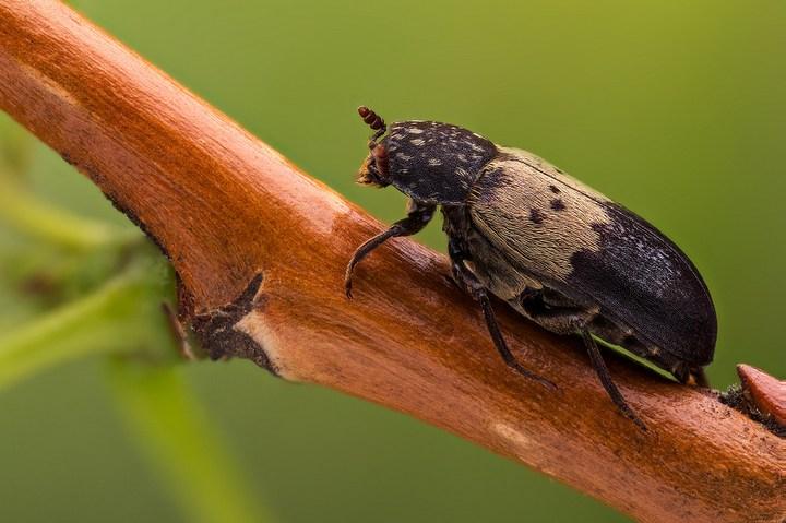 Макро фотографии насекомых (5)