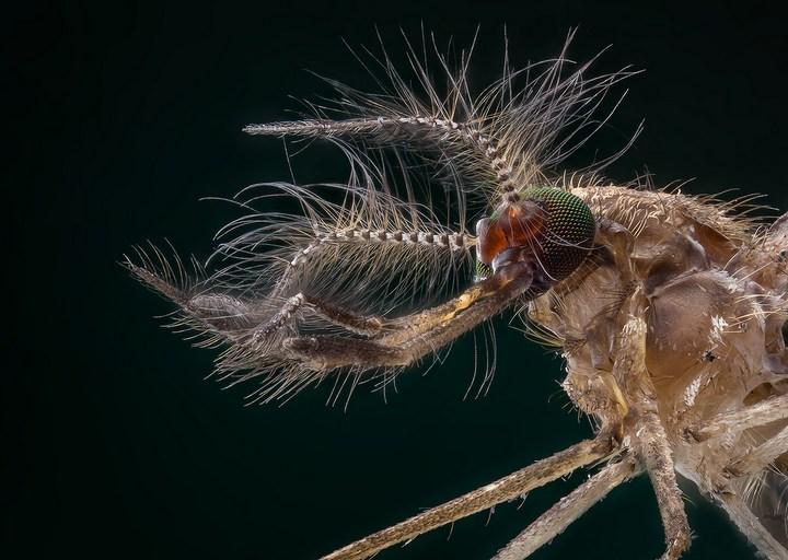 Макро фотографии насекомых (12)