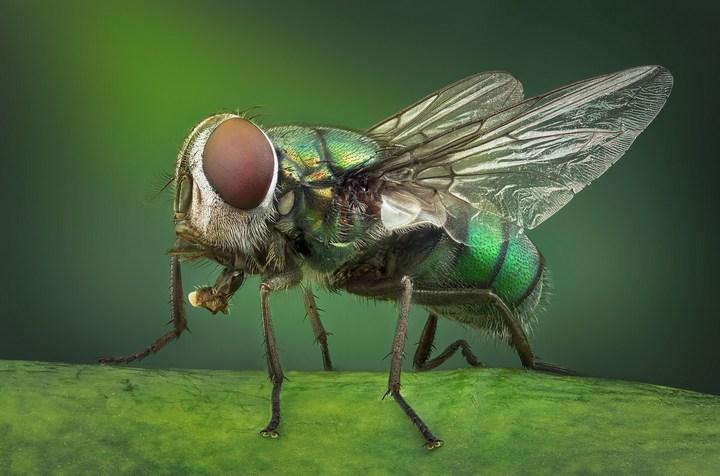 Макро фотографии насекомых (15)