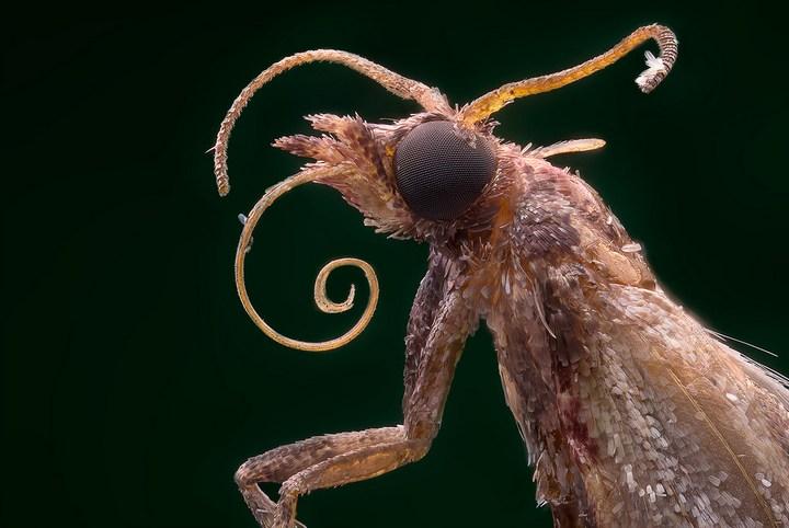 Макро фотографии насекомых (18)