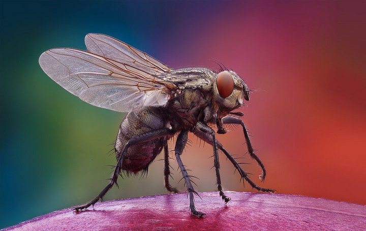 Макро фотографии насекомых (20)
