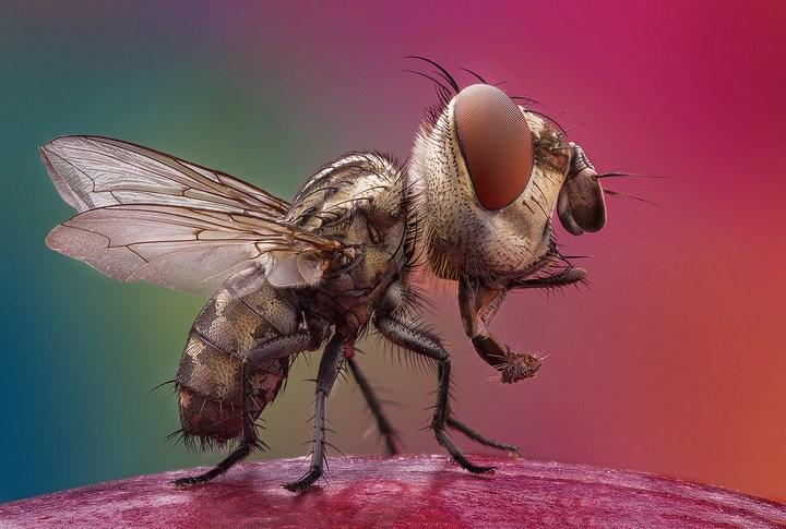 Макро фотографии насекомых (21)