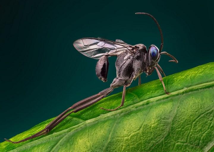 Макро фотографии насекомых (24)