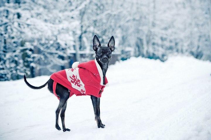 Зачем нужна одежда для собак? (1)