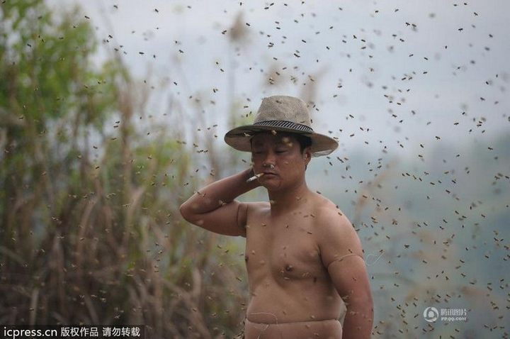 Китайца облепили 460 000 пчел (1)