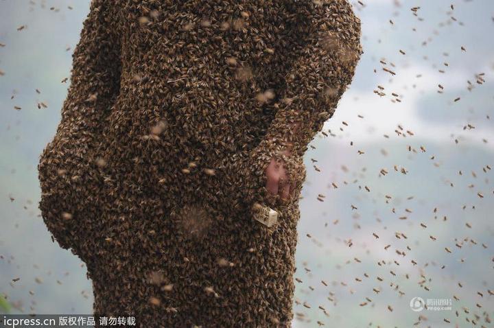 Китайца облепили 460 000 пчел (3)