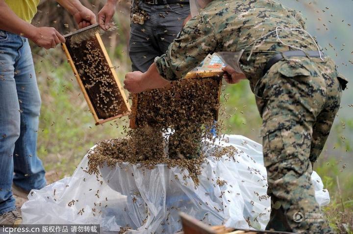Китайца облепили 460 000 пчел (4)