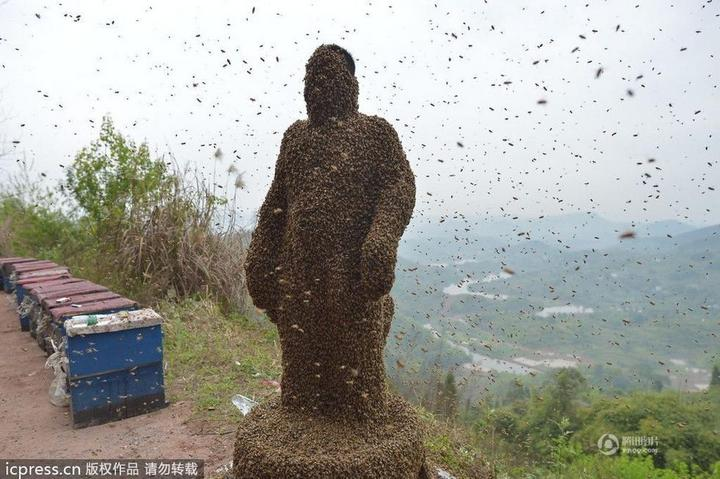 Китайца облепили 460 000 пчел (9)