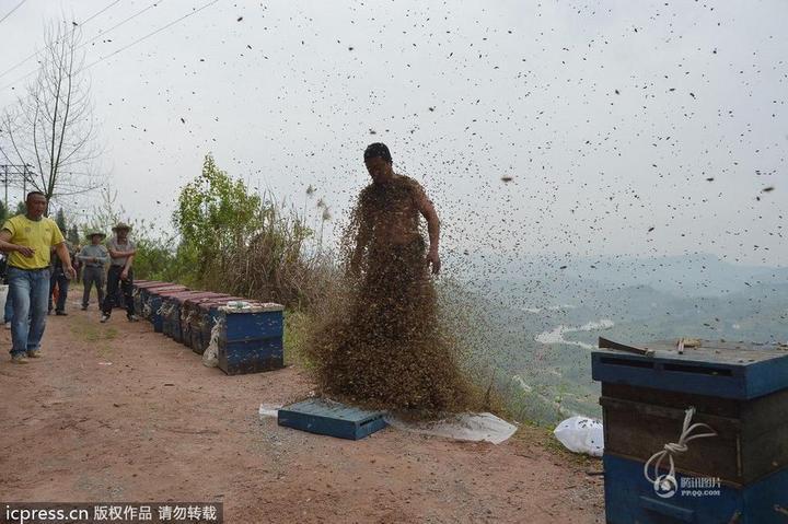 Китайца облепили 460 000 пчел (10)