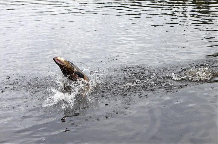 Отличная рыбалка с душевными фотографиями (61)