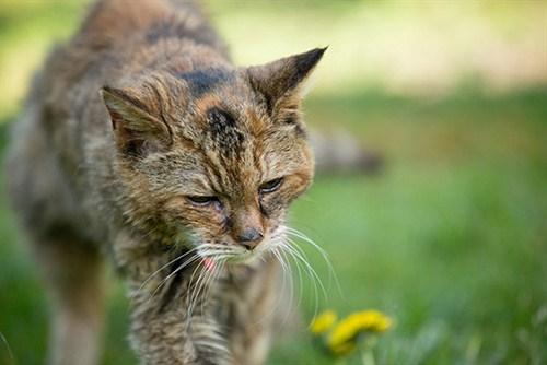 Рекорд Гиннеса. Поппи — самая старая кошка в мире (4)