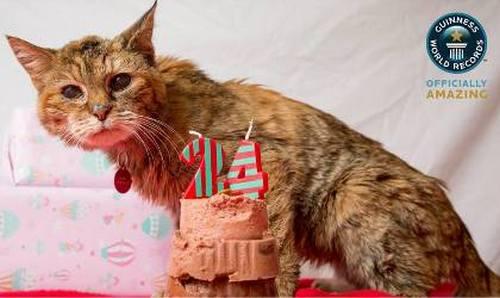 Рекорд Гиннеса. Поппи — самая старая кошка в мире (5)