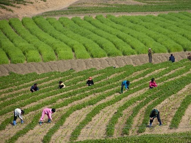 Запрещенные фотографии Северной Кореи (5)