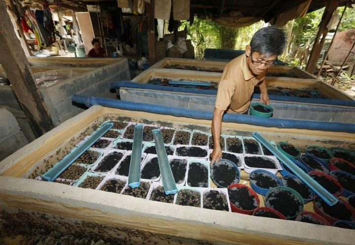 Как в Таиланде разводят съедобных насекомых (6)