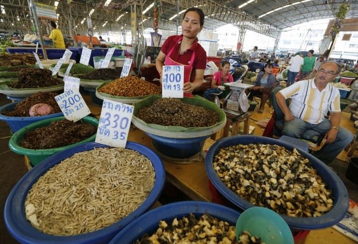 Как в Таиланде разводят съедобных насекомых (11)