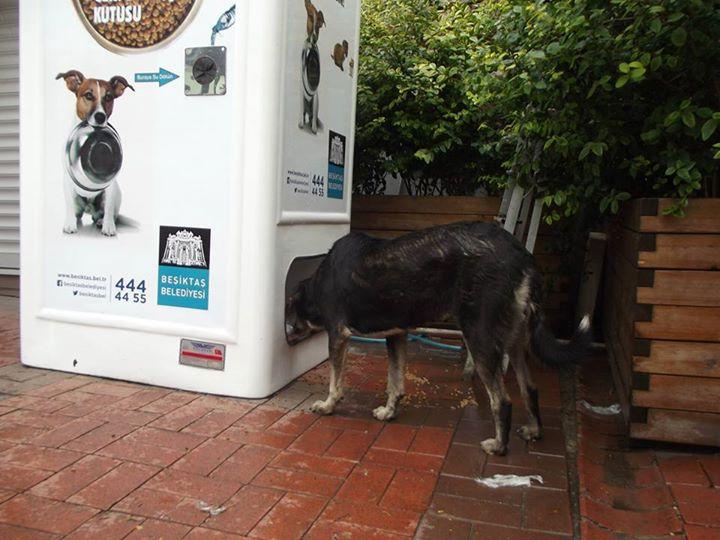Автоматы с едой для бездомных животных (1)