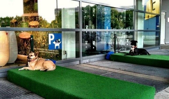 Парковка для собак (1)