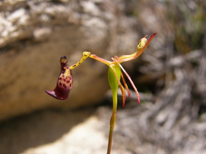 Десять самых необычных цветов в мире (6)