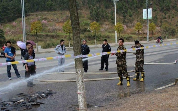 В Китае из грузовика выпало семь тонн рыбы (8)