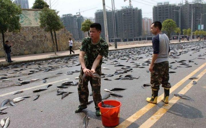 В Китае из грузовика выпало семь тонн рыбы (7)