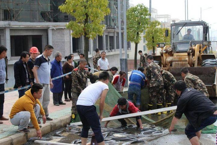В Китае из грузовика выпало семь тонн рыбы (3)