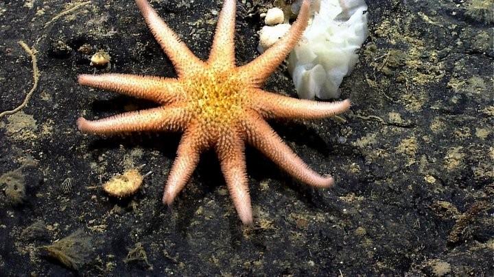 Интересные факты о морских звездах (1)