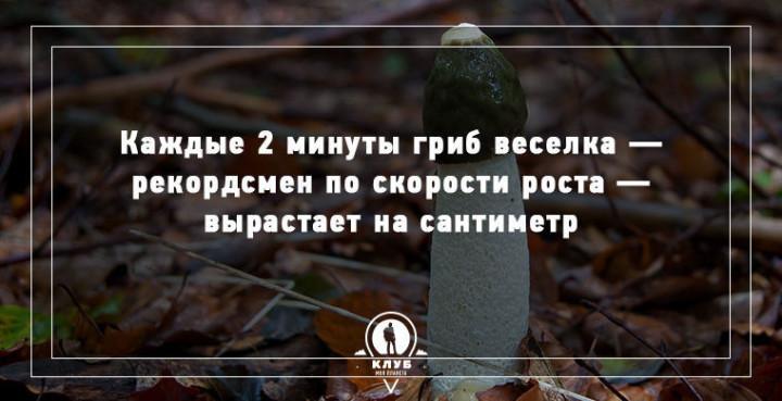 Интересные факты о грибах (5)