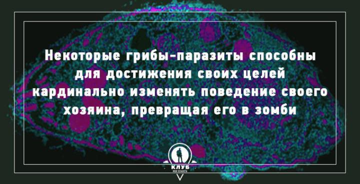 Интересные факты о грибах (3)