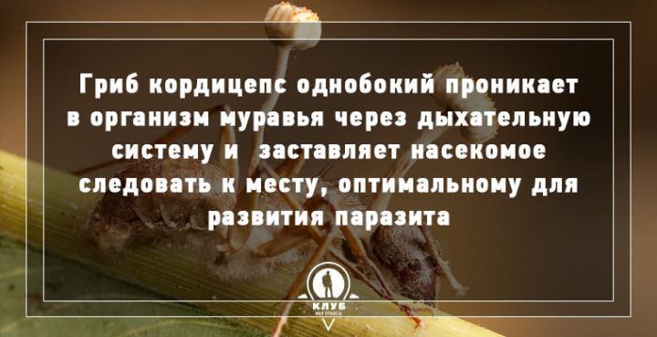 Интересные факты о грибах (2)