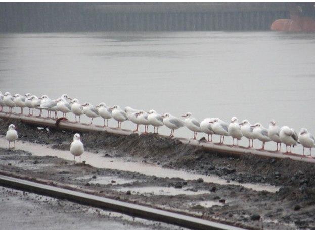 Гамбург 07-00 утра. Германия на столько сурова, что даже чайки начинают рабочий день с построения.