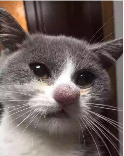 Котейку ужалила пчела, пичалька...