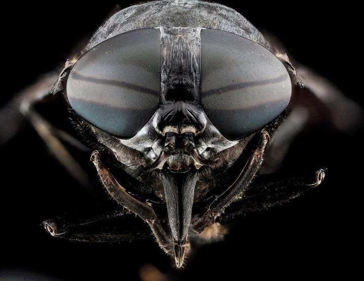 25 лучших макро-фотографий насекомых (2)