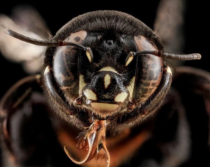 25 лучших макро-фотографий насекомых (7)