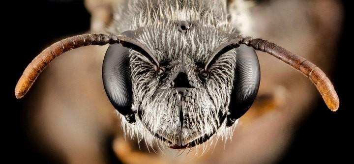 25 лучших макро-фотографий насекомых (11)